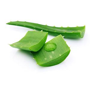 Aloe vera kúsky